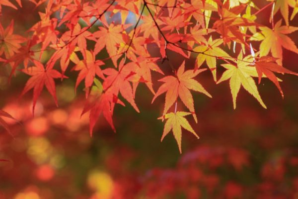 eyecatch_Autumn-leaves