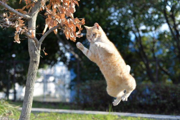 cat-eyecatch
